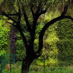 jardim-vertical-empresa