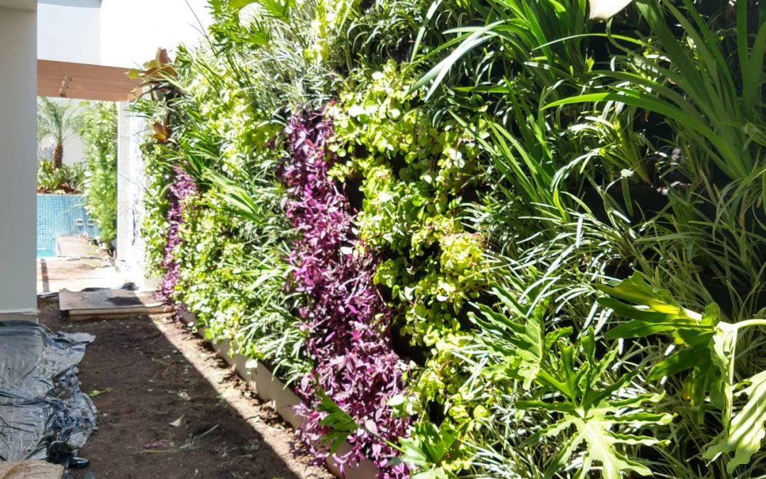 Jardim Vertical –  Nídia Piracicaba